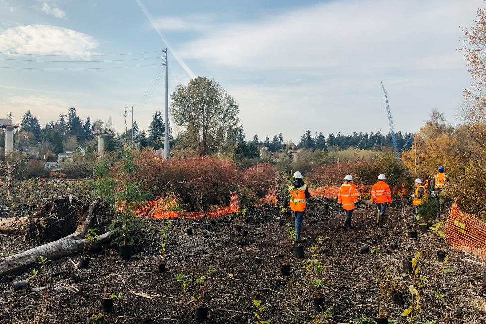 Planting crews walk through the Mercer Slough area being restored as part of the Blue Line construction project.
