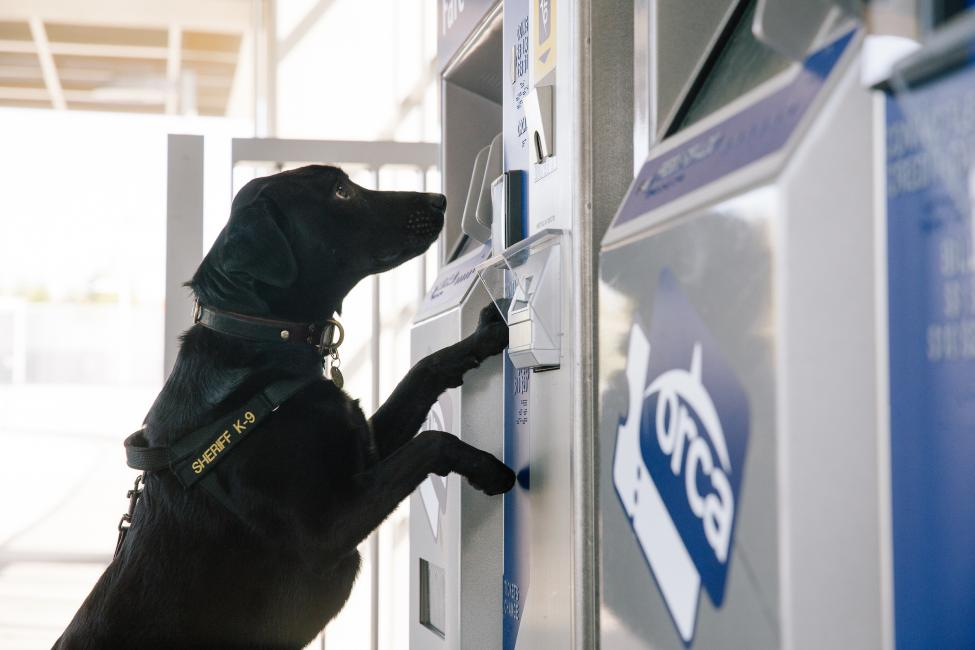 K-9 Luna works for the King County Sheriff's Office, Sound Transit Police Division.