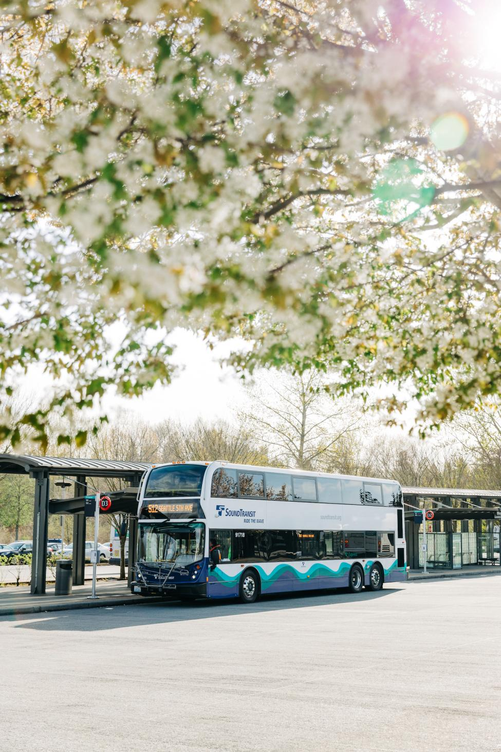 An ST Express Bus at the Lynnwood Transit Center in April, with cherry blossoms framing the top half of the photo.