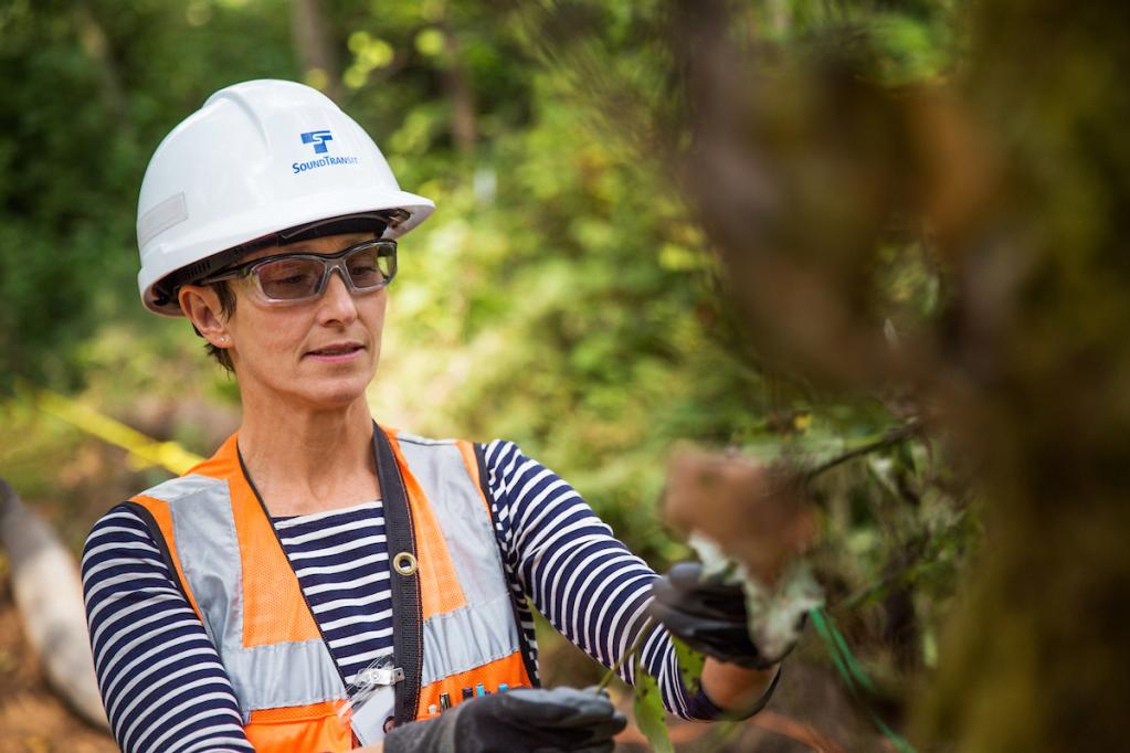 A woman in a hard hat looks at plants as part of an environmental review.